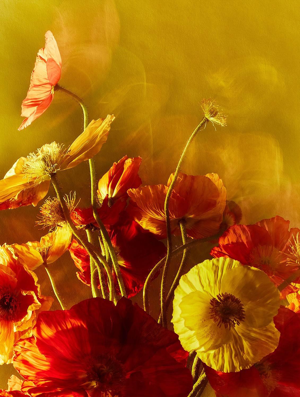 FLOWER - POWER - ART