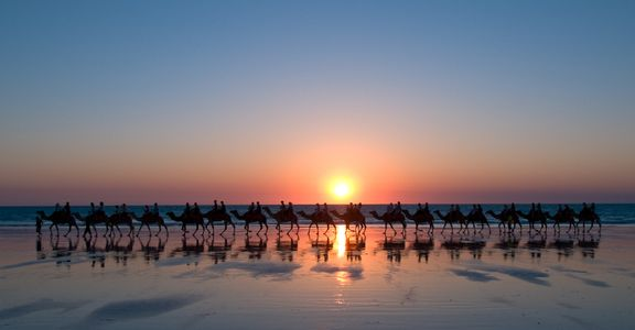 Camels, Broome, Australia