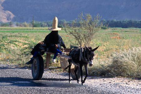 Women Farmers. Shibam, Yemen