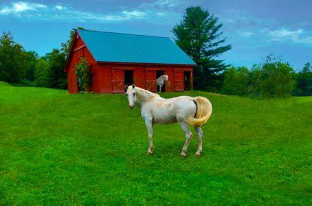 Horses, Sugar Hill, New Hampshire