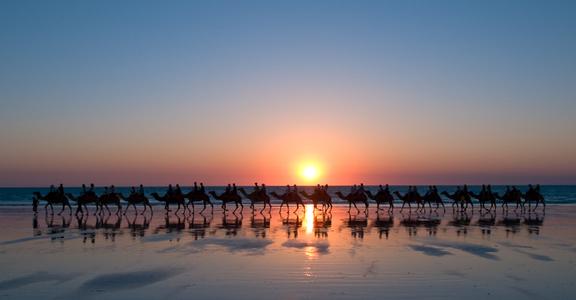 Camel Excursion. Broome, Australia