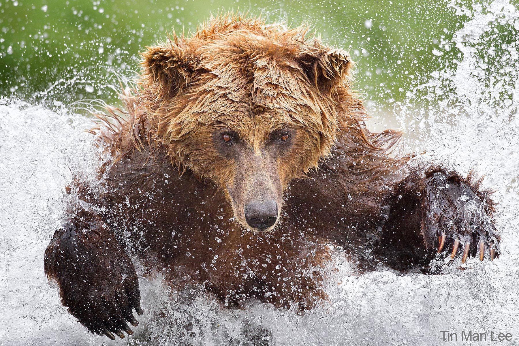 tinman_bear_1800_50_2.jpg
