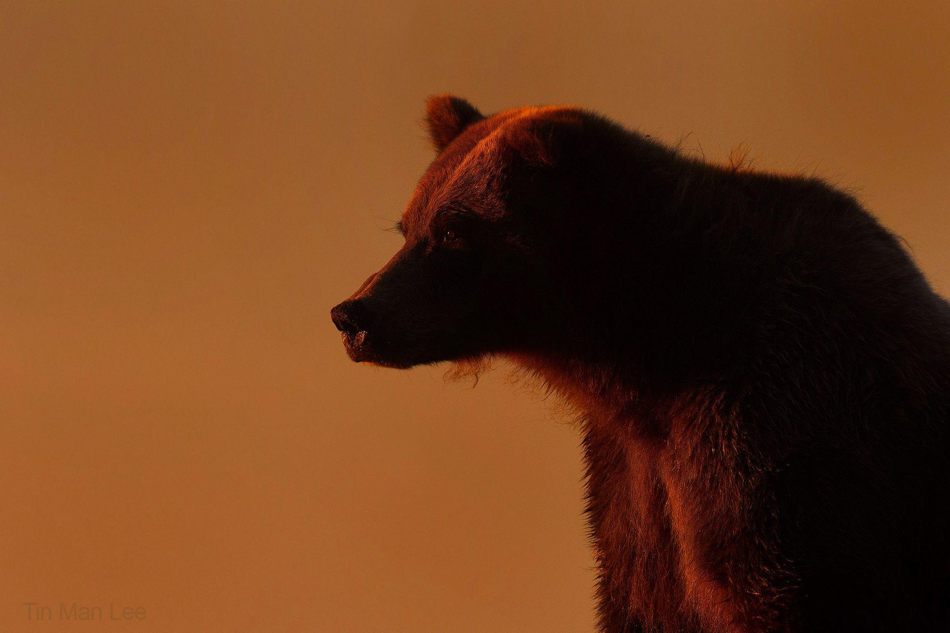 bear_sunset1.jpg