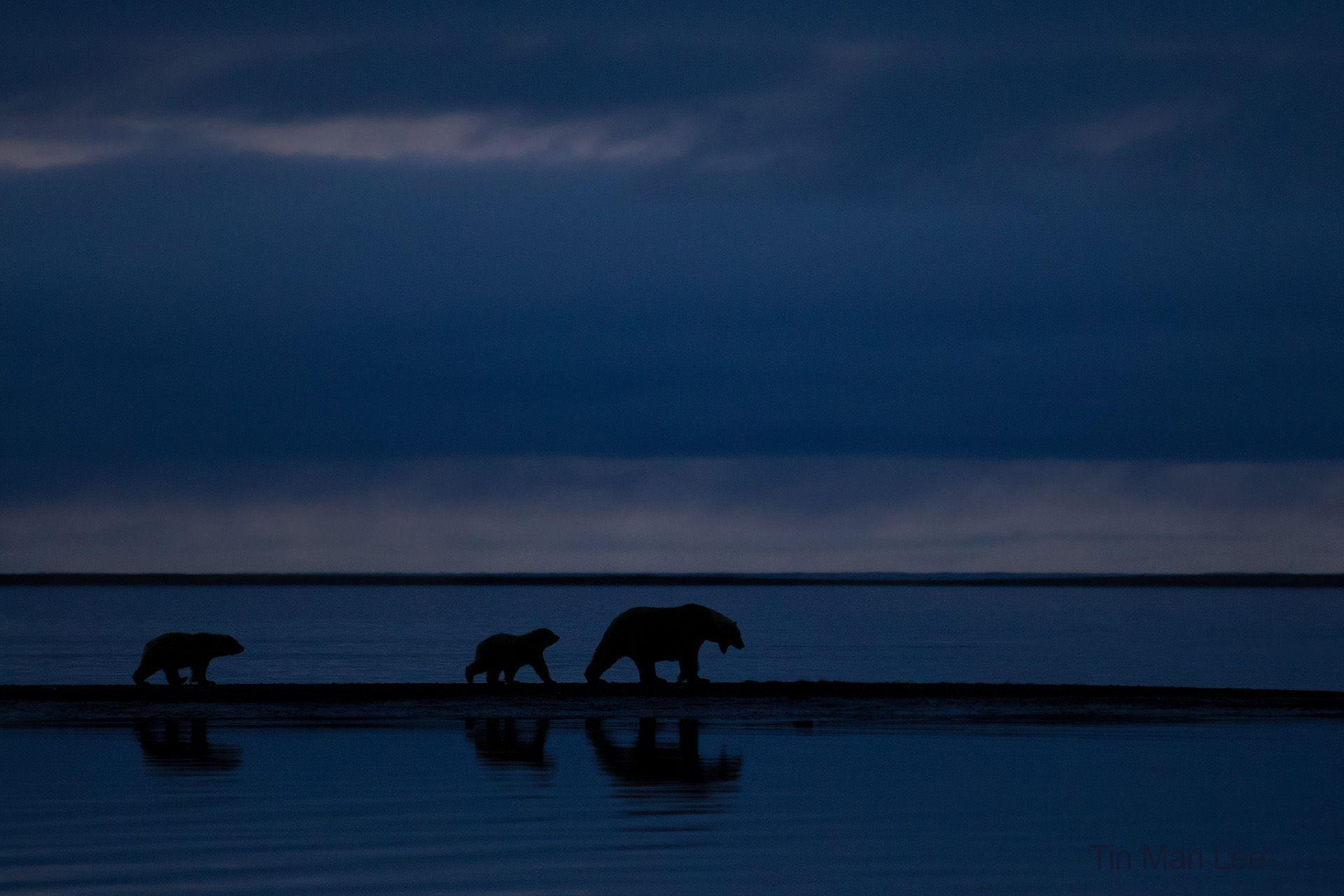 polar_bear_family_night.jpg