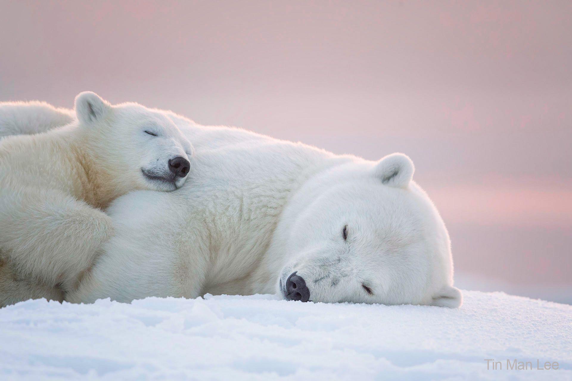 bear_sleep_1920.jpg