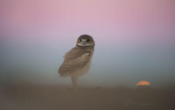 owl_purple1.jpg