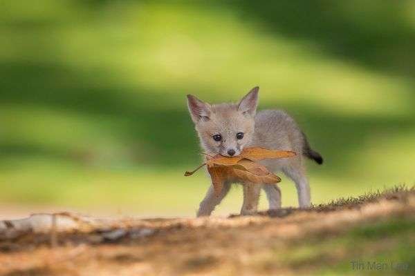 fox_background1.jpg