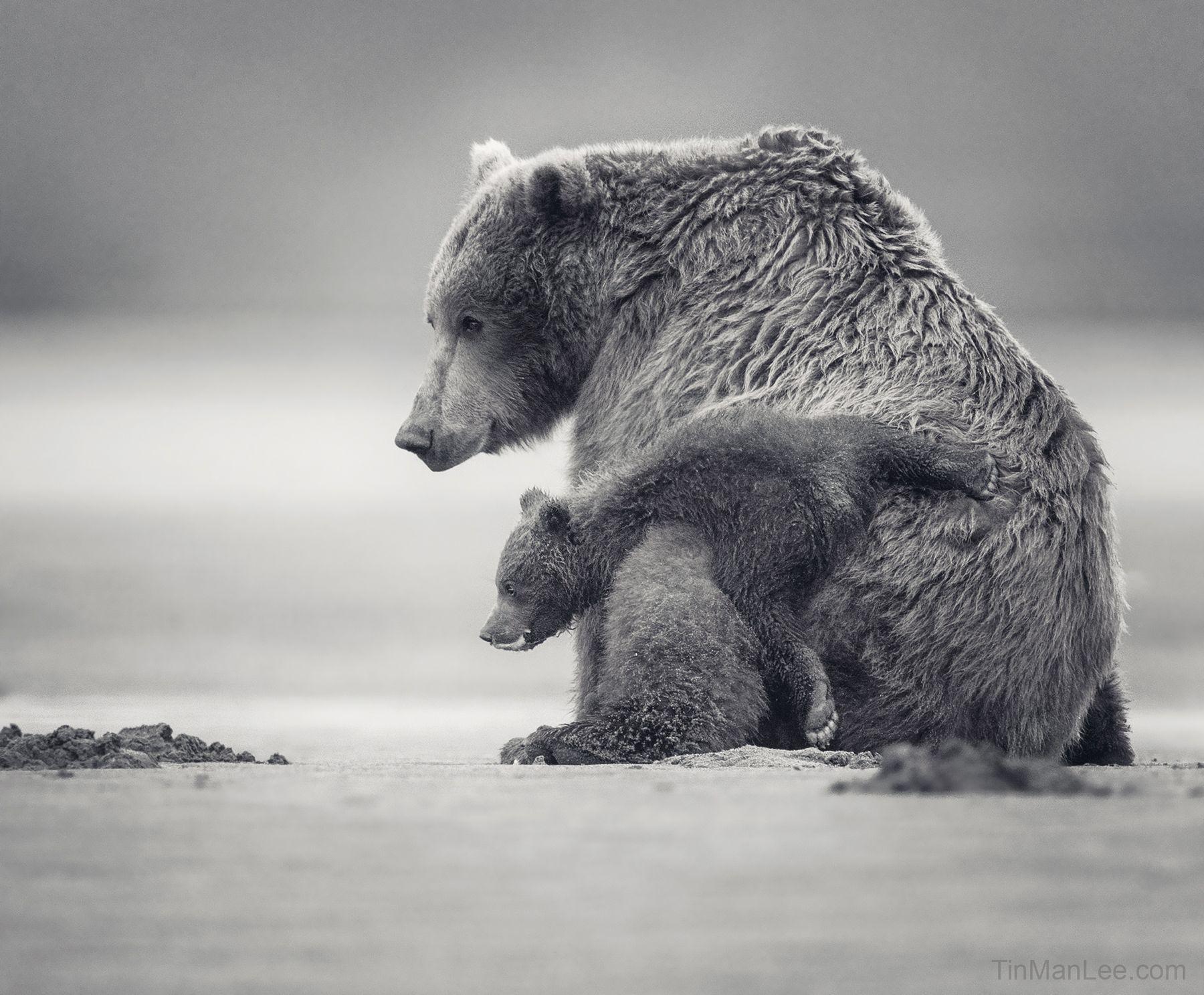 bear_cub_back.jpg