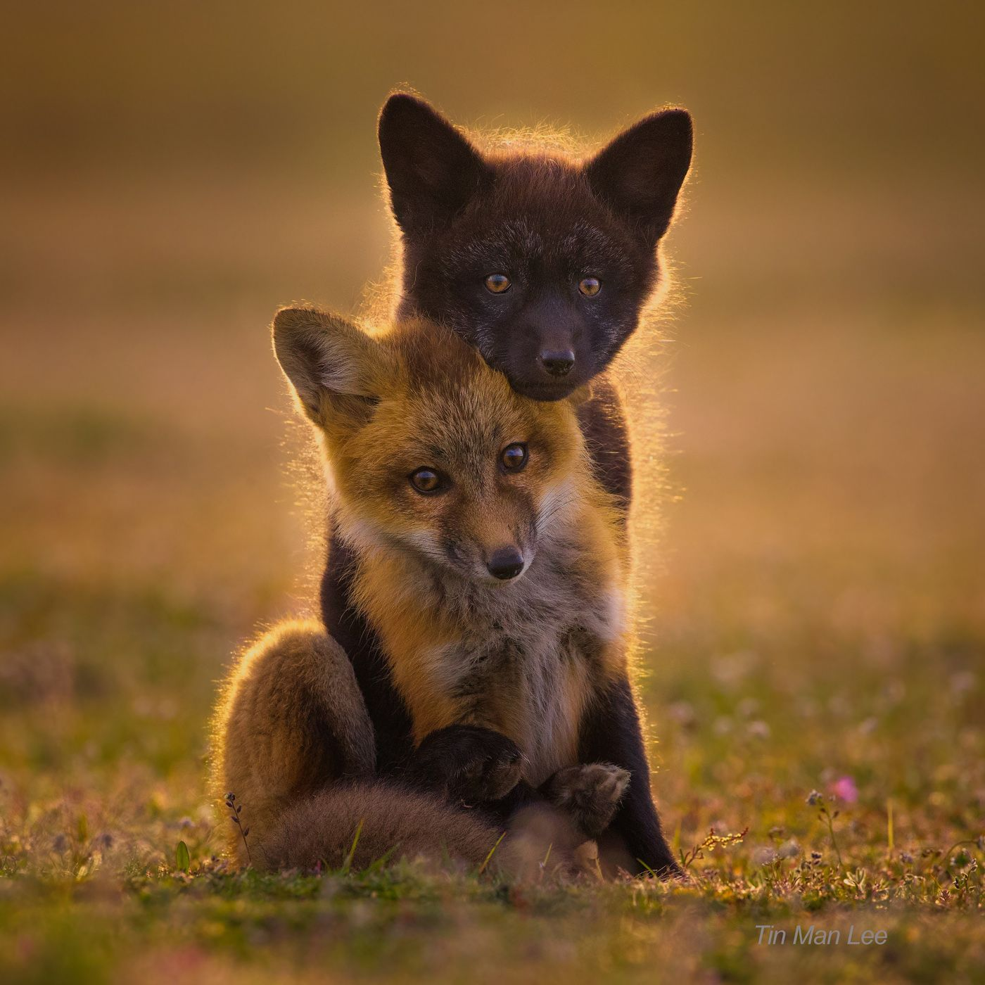 fox_pup_instagram223.jpg