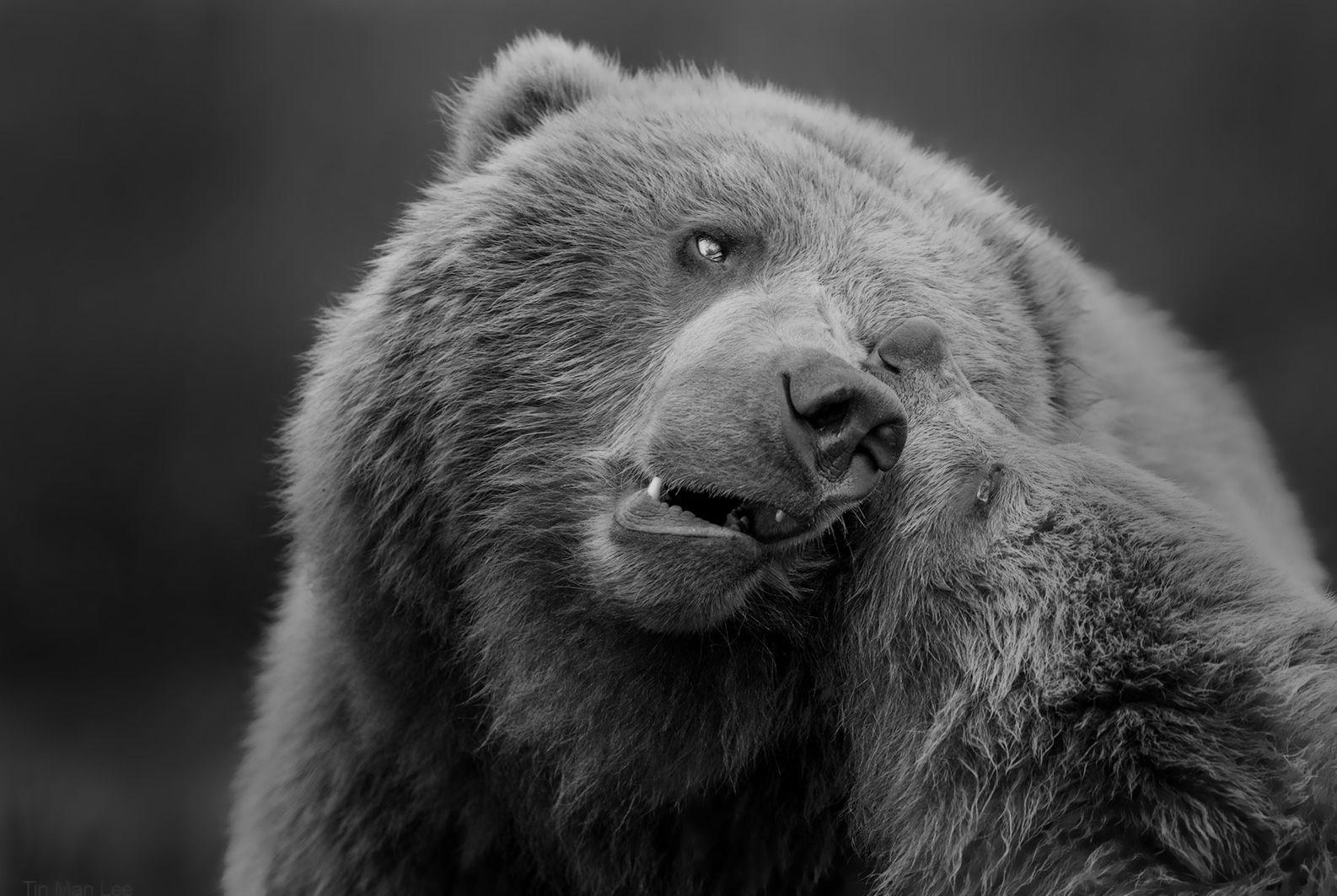 bear_mother_cub_bw.jpg