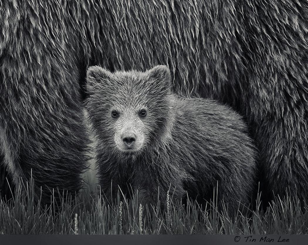 bear_hut.jpg
