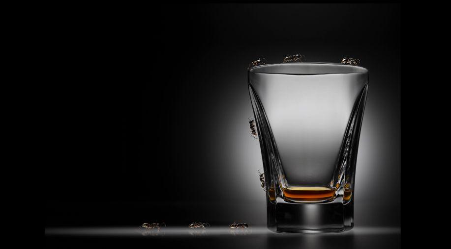 BUGS & GLASS