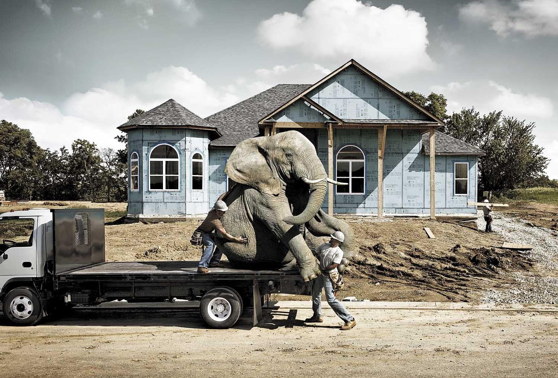 1usg_elephant_truck_lb.jpg