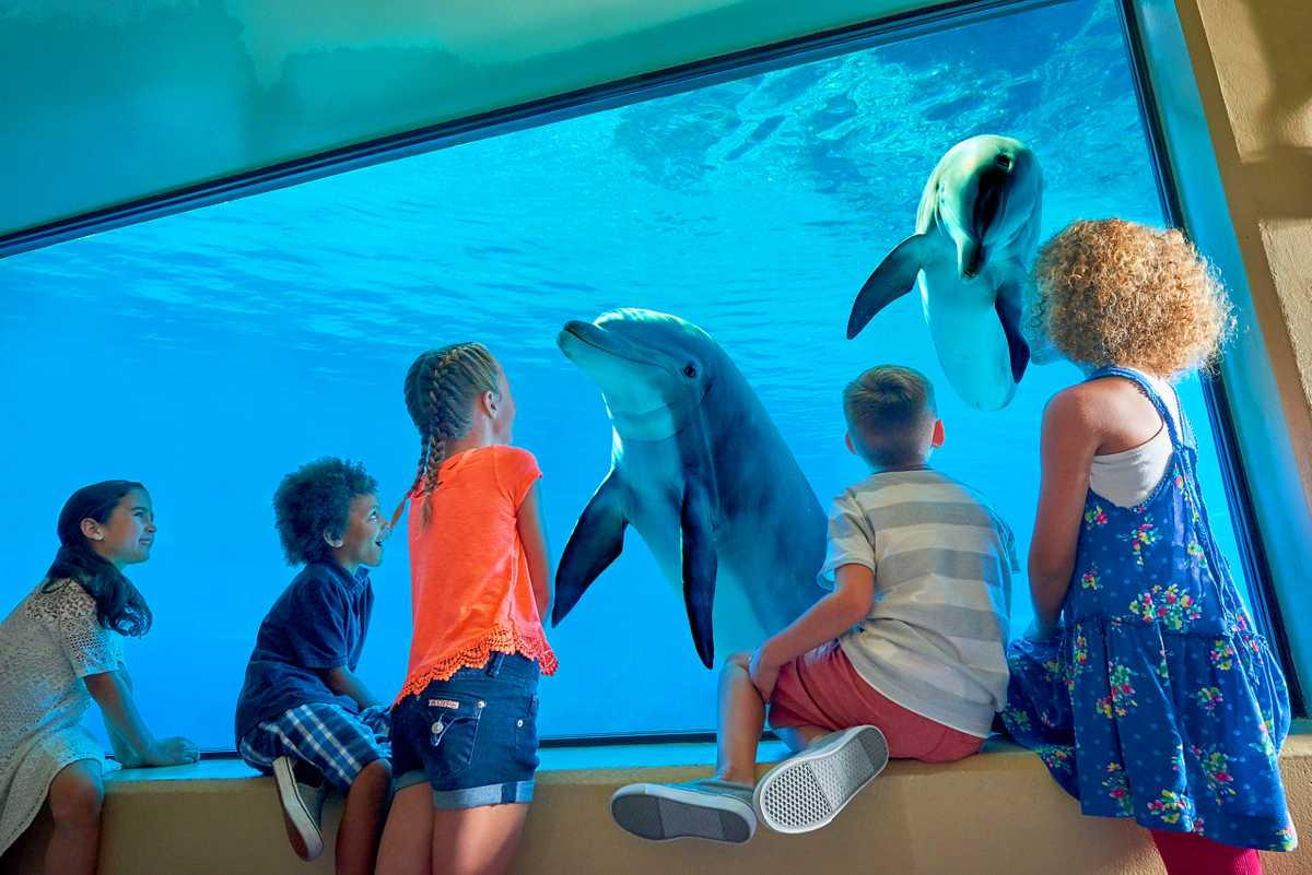 The Dolphin Habitat at the Mirage Resort and Casino in Las Vegas