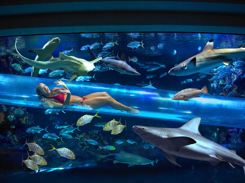 The Shark Tank at The Golden Nugget in Las Vegas, Nevada.image © Sampsel Preston Photography