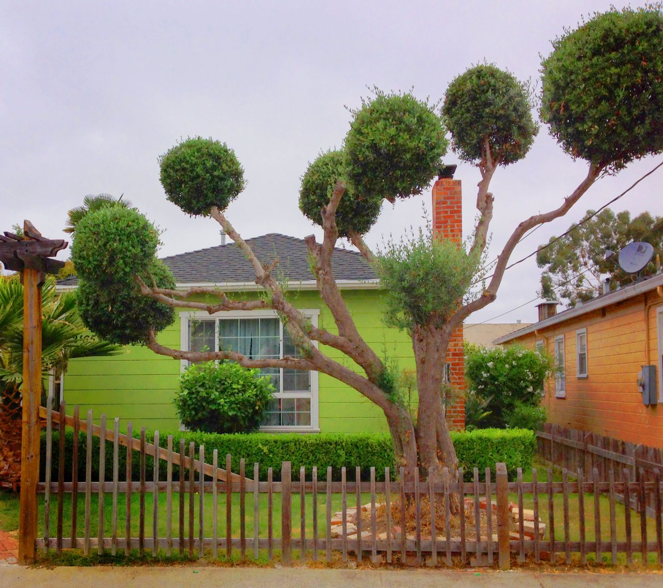 Dr. Suess Tree (San Leandro, CA)