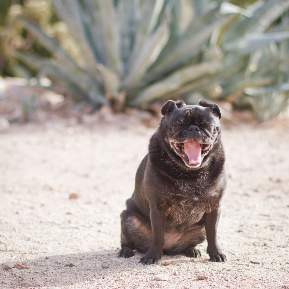 Tucson dog portrait photography