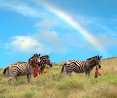 Hero 3 Zebras_LB.jpg