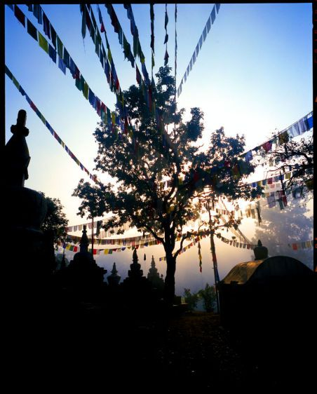 11_0_102_1NE003_PrayerFlagTree.jpg