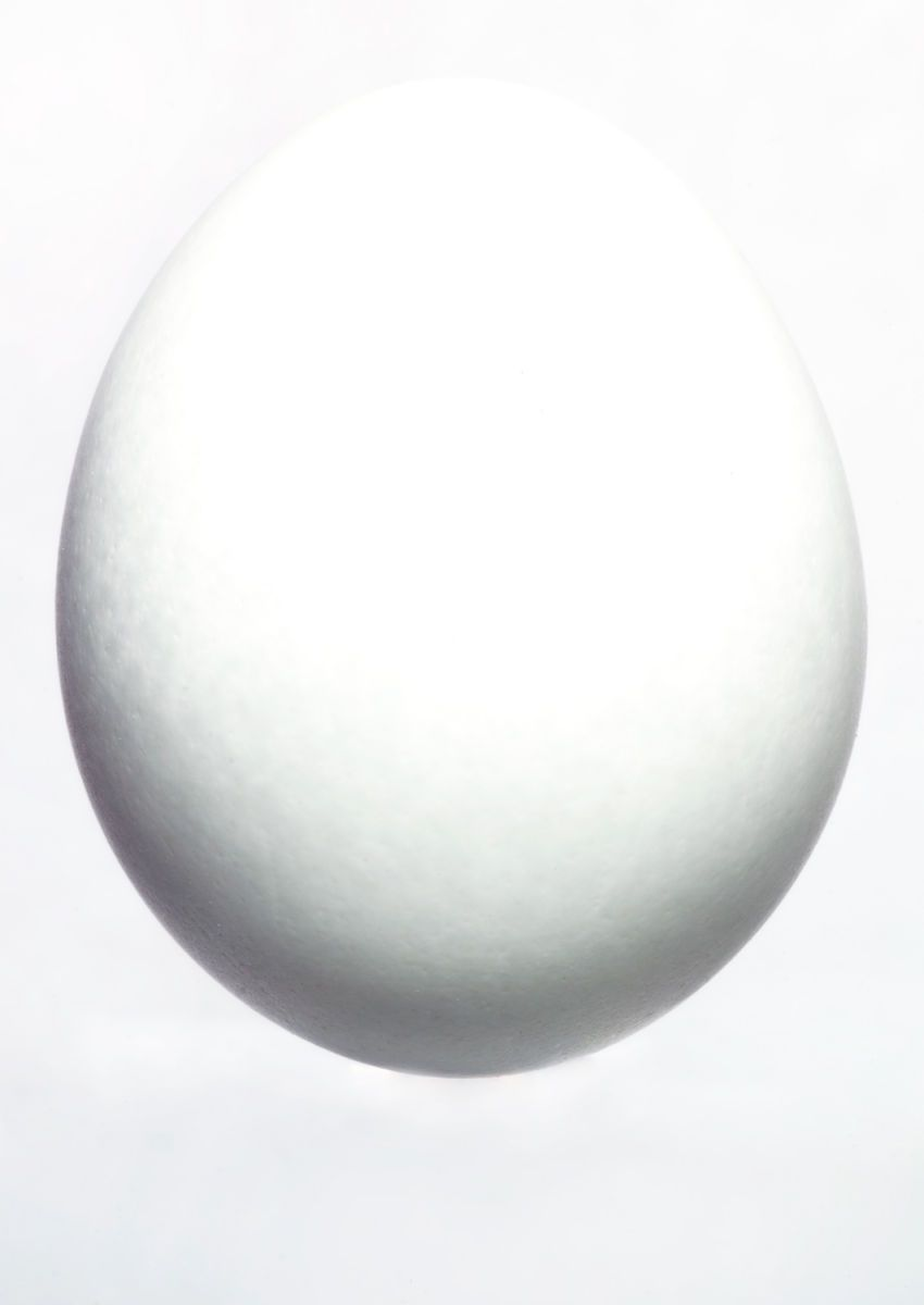 Egg on white, 2013