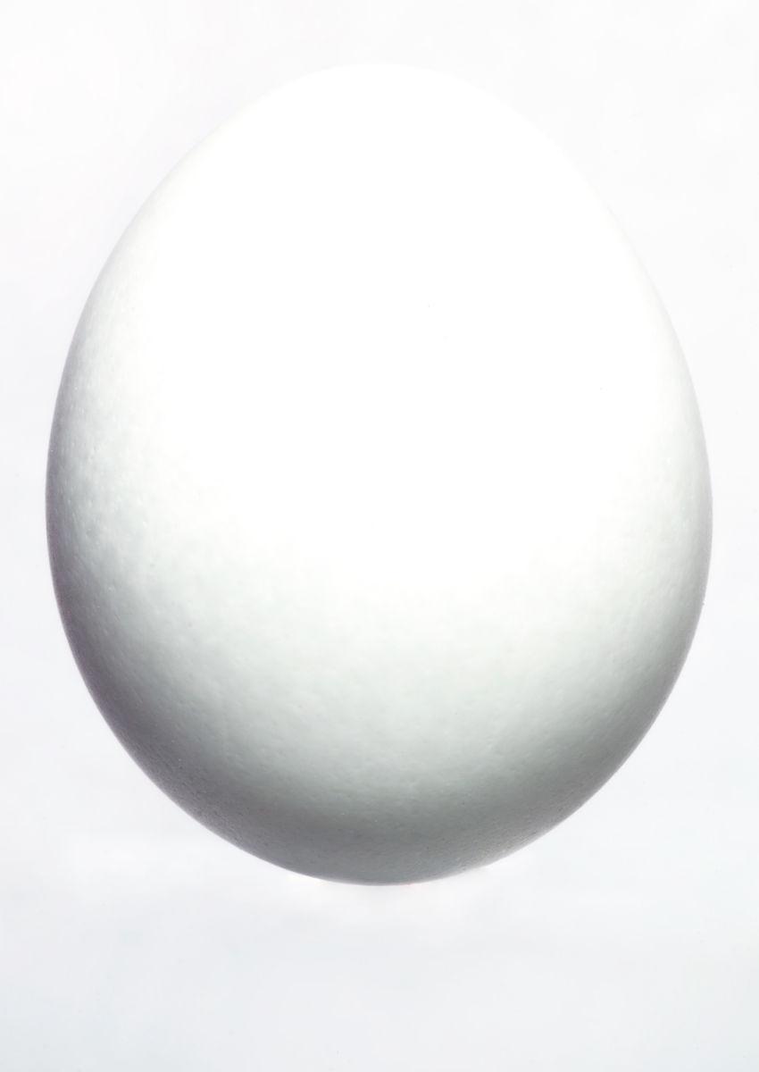 Egg on white, 2013