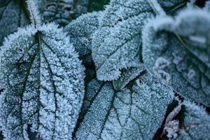 Morning-Frost--JABP1813.jpg