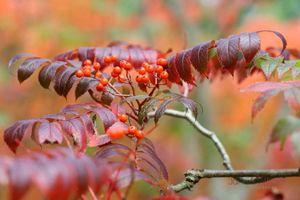 Autumn-Watch--JABP1098.jpg