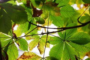 Autumn-Chestnut-Decay--JABP1290.jpg