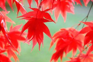 Autumn-Ending--JABP931.jpg