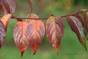 Autumn-Leaves--JABP1294.jpg