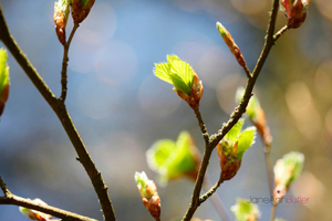 New-Beginnings-Spring-Bud--JABP1302.jpg