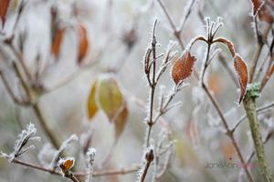 Winter's-Tale--JABP975.jpg