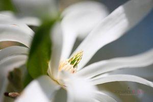 Exquisite-Magnolia--JABP1280.jpg