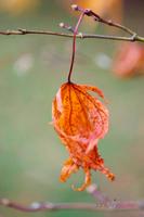 Fall--JABP932.jpg