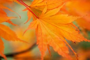 Autumn-Light--JABP965.jpg