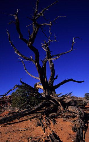 1dead_tree.jpg