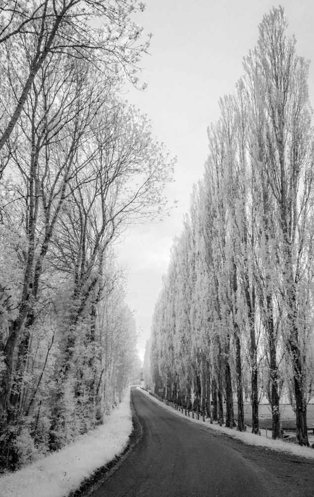 Receeding Narrow Road, Infared