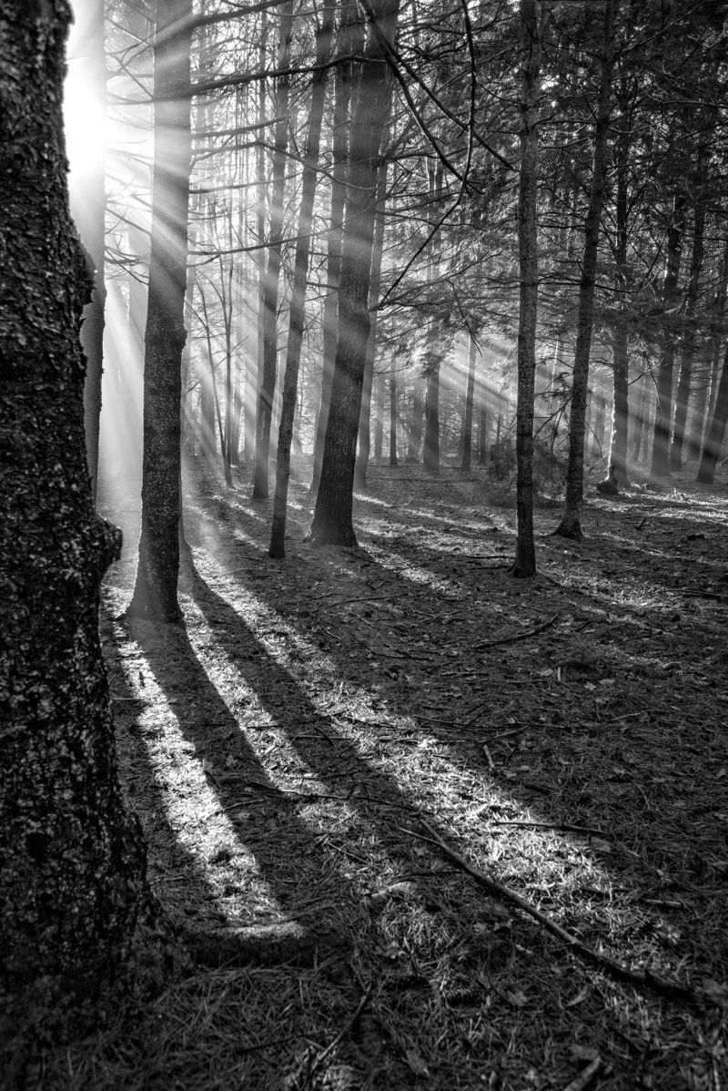 Sun Rays in Woods, i