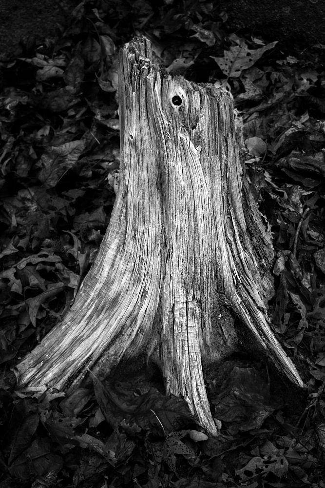 Weathered Stump