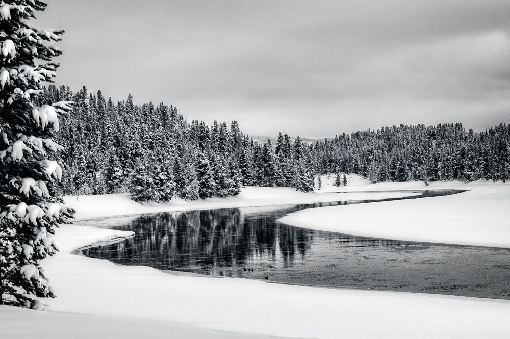 Yellowstone River and Reflections