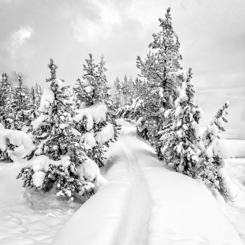 Snow Covered Pathway