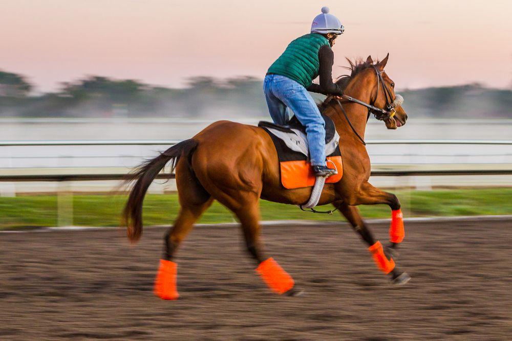throughbred_orange_socks_running_morning_workout.jpg
