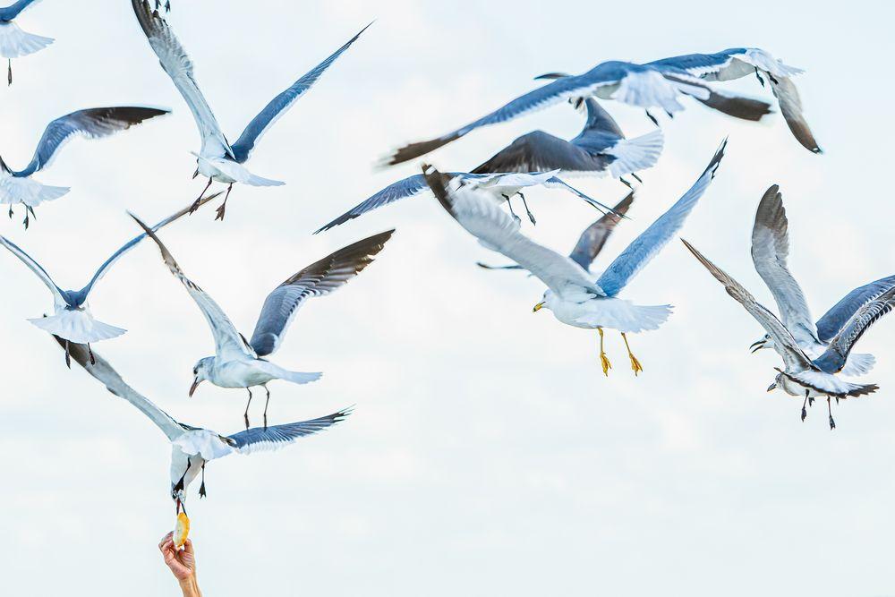hungry_gulls.jpg