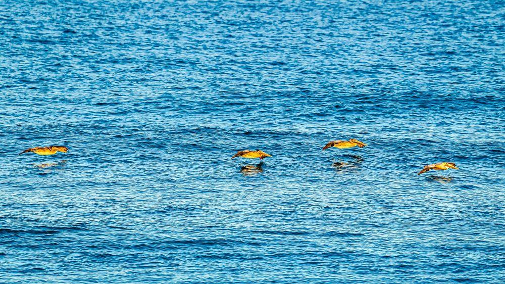 pelicans_last_light.jpg