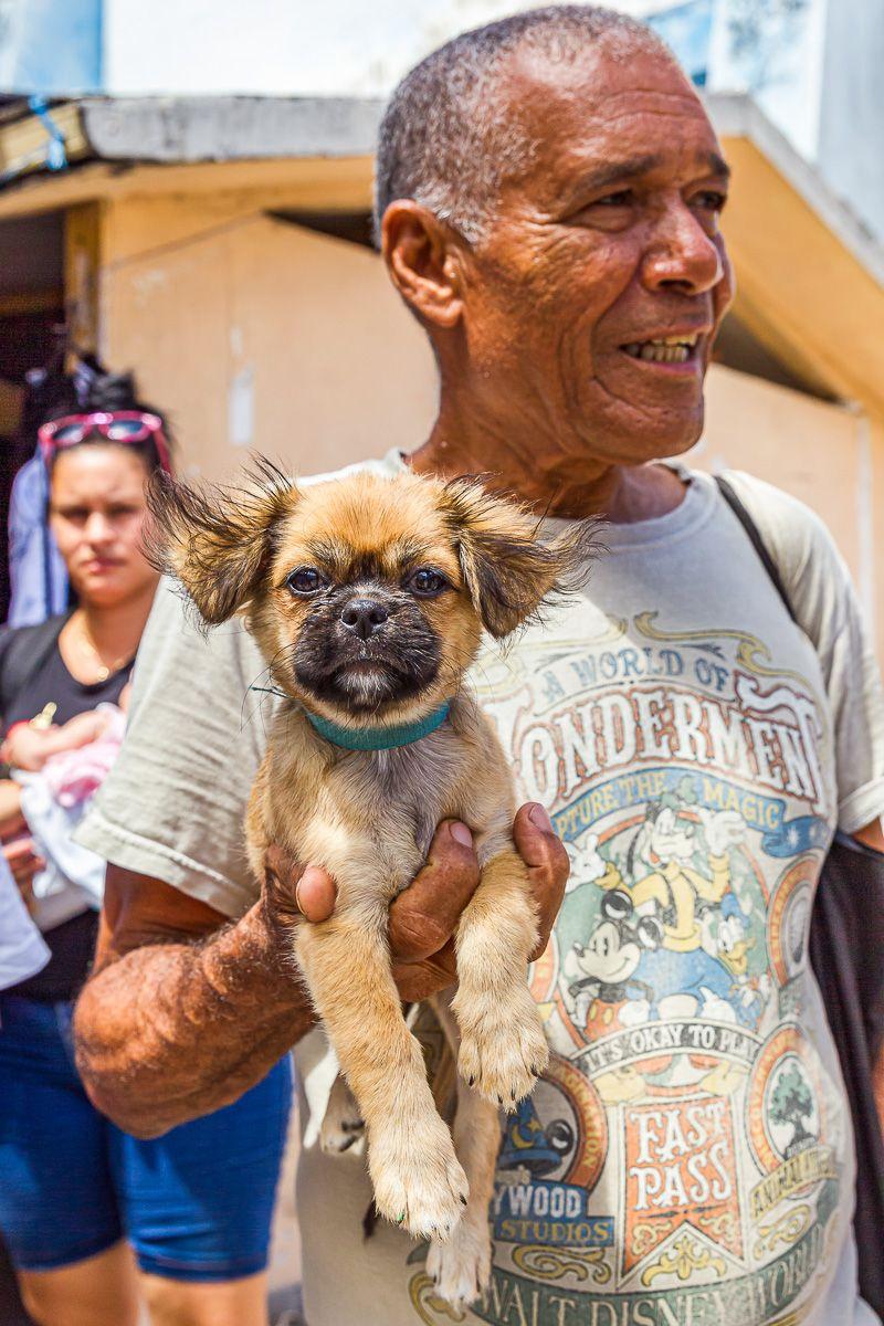 cuba_street_attentive_puppy.jpg