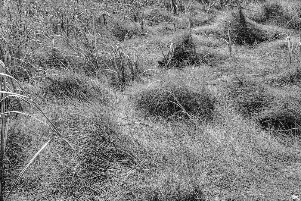 1maine_falmouth_estuary_grass_2.jpg