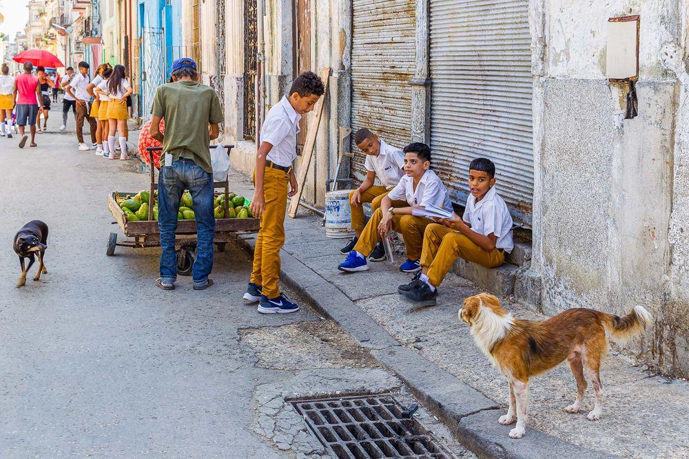 cuba_street_dogs_school_kids.jpg