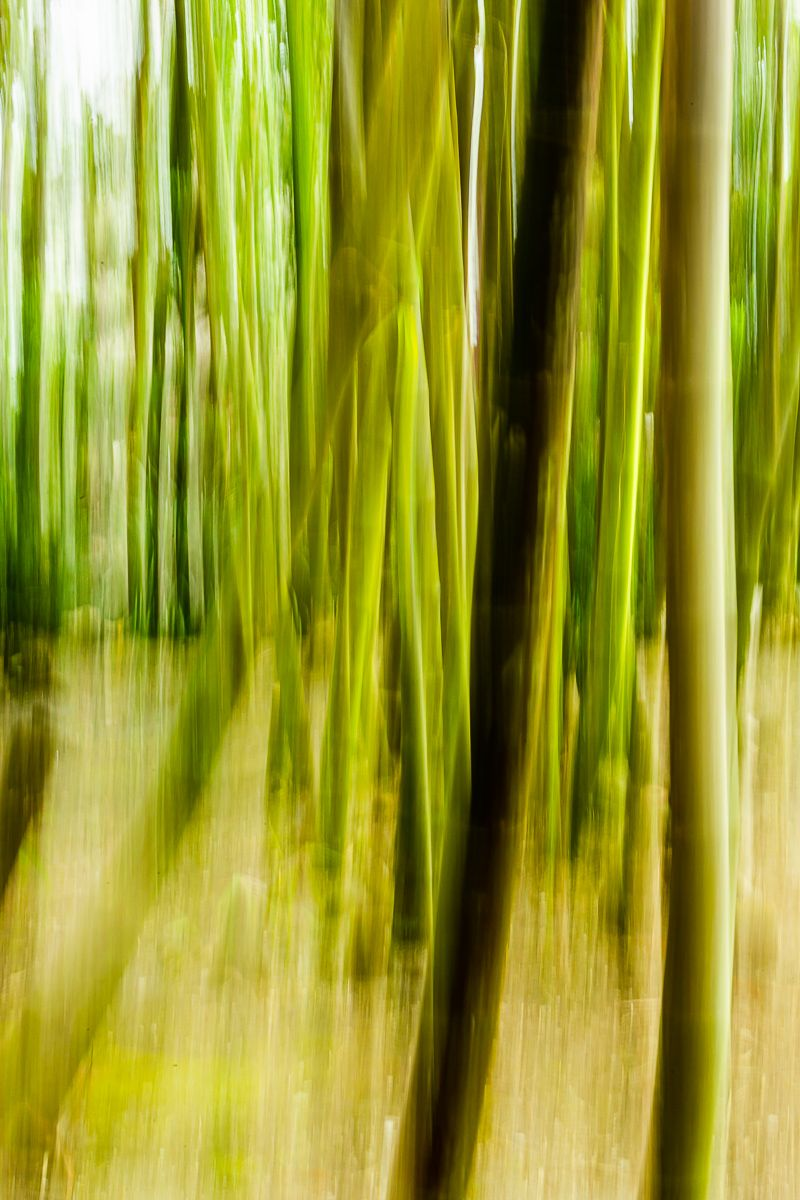bamboo_sound_morikami.jpg