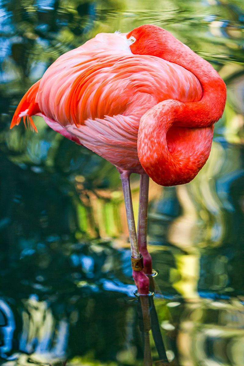 flamingo_standing.jpg