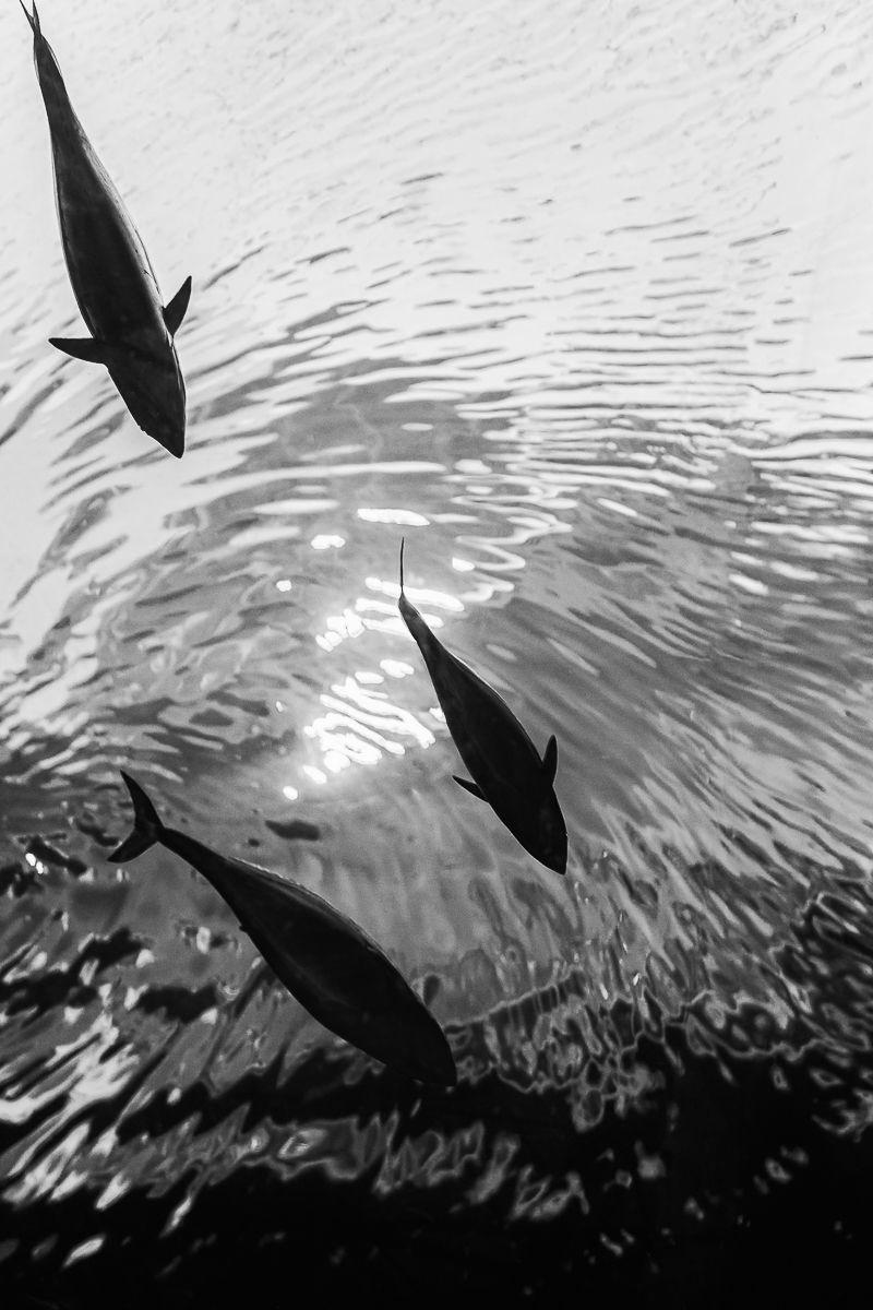 world_tuna_day.jpg